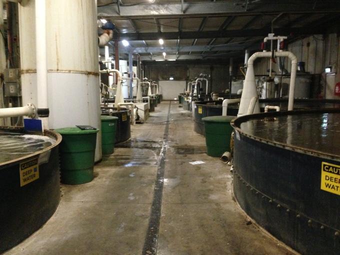 Inside an aquaculture facility